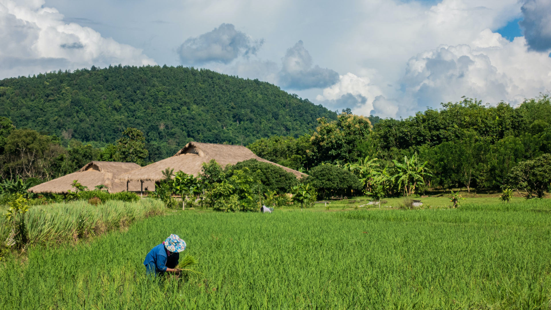 Custom Travel Planner Network-Thailand-Change Mai-Rice Farming-dennis-rochel-nd2P5OkWkMs-unsplash