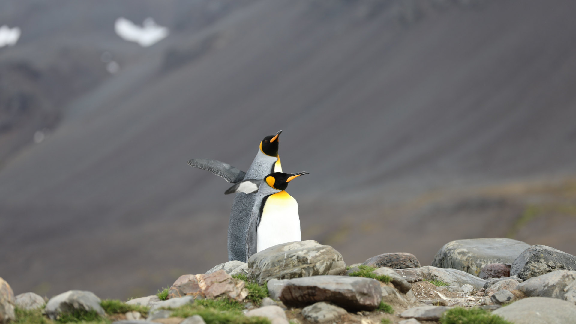 Custom Travel Planner Network-Antarctica-Penguin Couple